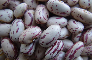 Chinese Light Speckled Kidney Beans Oval Shape