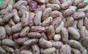 Chinese Light Speckled Kidney Beans Long Shape