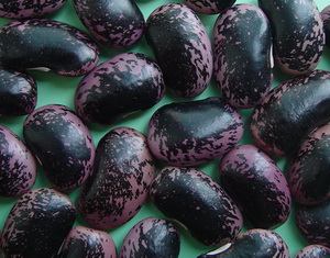 Chinese Large Black Speckled Kidney Beans